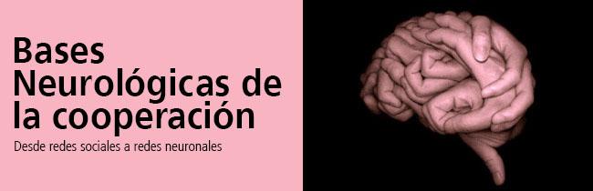 neurological-basis-of-cooperation español