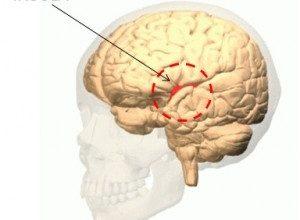 Cerebral Cortex publica estudio del CICS sobre estímulos de feedback en la insula anterior, que sería crucial para aprender a adaptarnos a diferentes situaciones